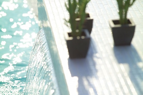 cactus beside the swimming pool for exterior decoration