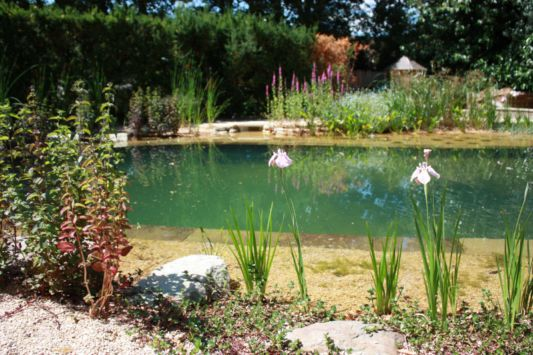 garden with naturaly swimming pool