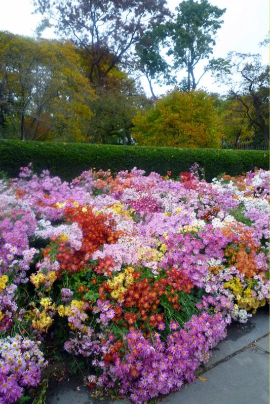 gardens ideas with full of flowers