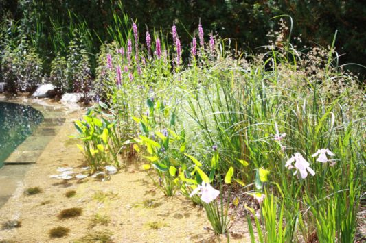 natural shades of flowers around the pond
